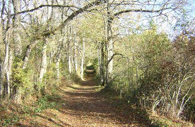 Chemins et sentiers d'automne