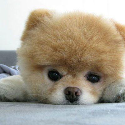 """Der süßeste Hund der Welt"" :D"