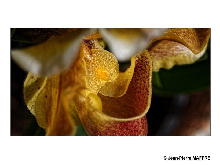 On se fait depuis toujours une certaine idée de la beauté des orchidées mais on peut parfois déceler en elles une vision sublimée.