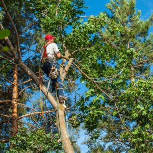 Obtain These Outstanding Benefits by Hiring Tree Removal Services