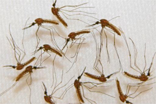Journée mondiale de la lutte contre le paludisme
