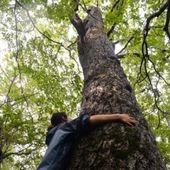 Une forêt sacrifiée pour 4 jours de JO