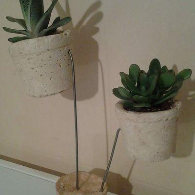 succulentes et cactus en lévitation