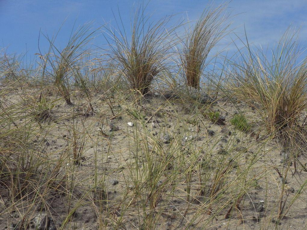 Album - Pen Bron, entre les dunes et l'océan