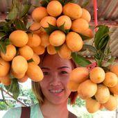 Fruits de saison (19-03) - Les ma-praang - Noy et Gilbert en Thaïlande