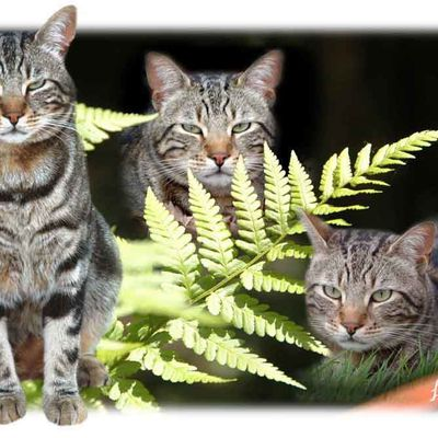 photomontage chat