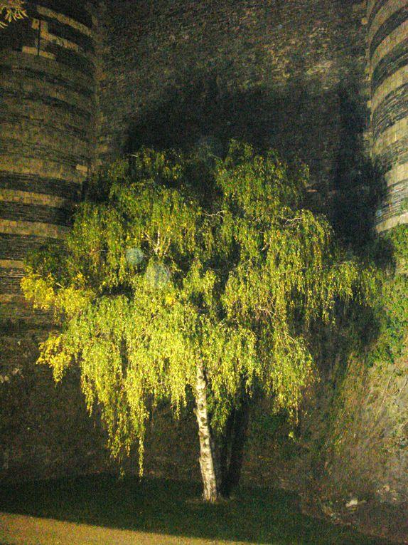 Montrer la beauté, la puissance de l'arbre dans toutes ses facettes
