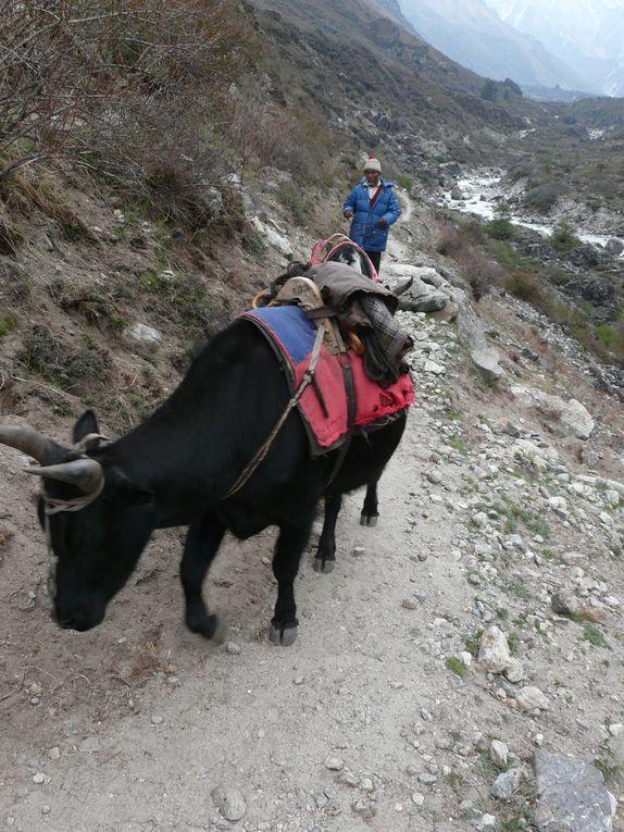 Trek dans le Lang-Tang, après le beau temps, la tempête de neige nous empêchera d'arriver en haut du glacier ...