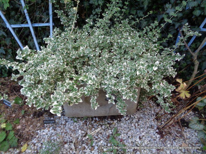 Le jardin le Clos fleuri en Décembre 2018