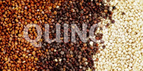 Nấu hạt quinoa như thế nào / How to cook quinoa?