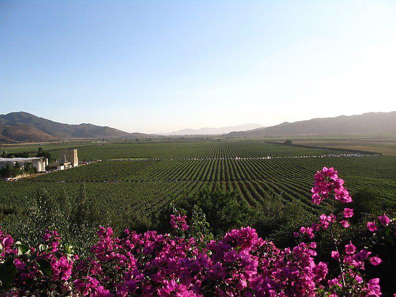 Valle de Guadalupe - Baja California. La Basse Californie, située au Nord-Ouest du Mexique, juste sous les Etats-Unis, a donc un climat tempéré. Les hivers sont doux et humides, et les étés chauds et secs. La proximité de l'océan est à l'origine de ces conditions améliorées.