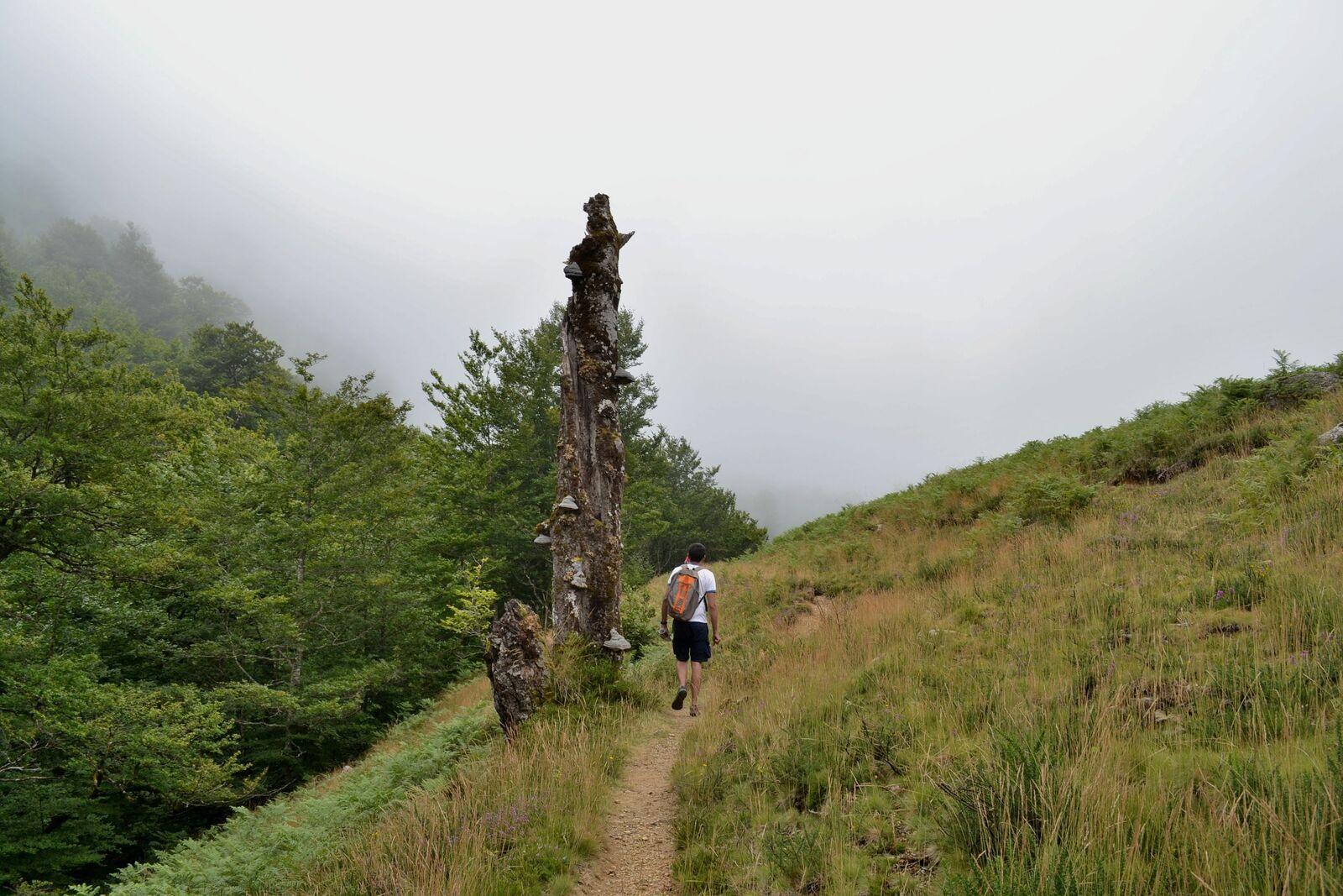 Petite virée dans la verdoyante forêt d'Iraty au Pays Basque!