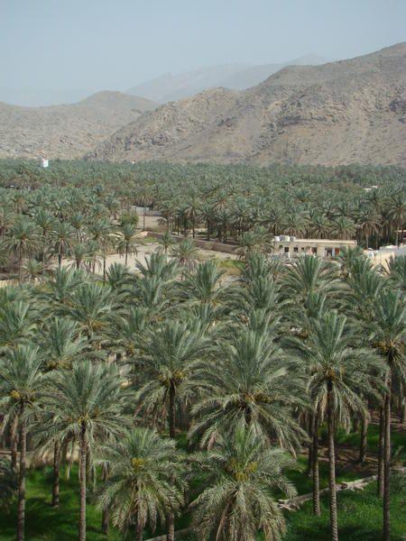 193 photos pour ce premier album de notre séjour à Oman. Vous y trouverez des photos des lieux suivants : Sohar,Al Khaboura, Rustak,Nakhal,Muscat,Mutrah, Qurm,Tiwi,Wadi Shabs,Ras Al Hadd,Ras al Junayz (Lieu de ponte des Tortues de mer),Misfah,Tanuf