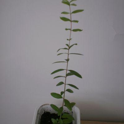 Poussière, ennemie des plantes d'appartement