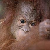 L'existence des cultures animales est officiellement reconnue