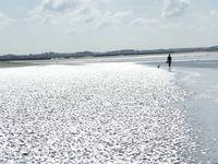 reflets en baie de Somme - cliquer sur les images