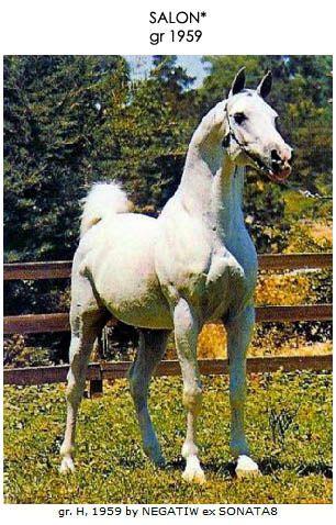 Album - Les-Ascendants-et-collateraux-de-nos-chevaux