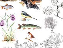 Illustration faune et flore