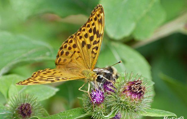 Papillon : Le tabac d'Espagne
