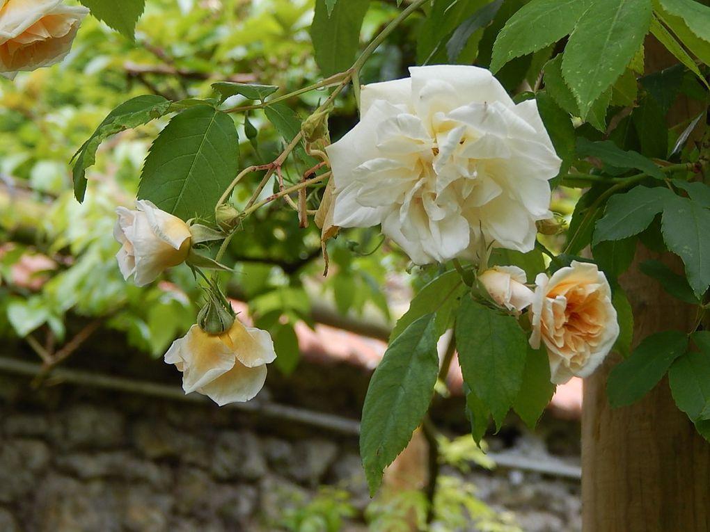 Au Jardin d'André Eve à Pithiviers