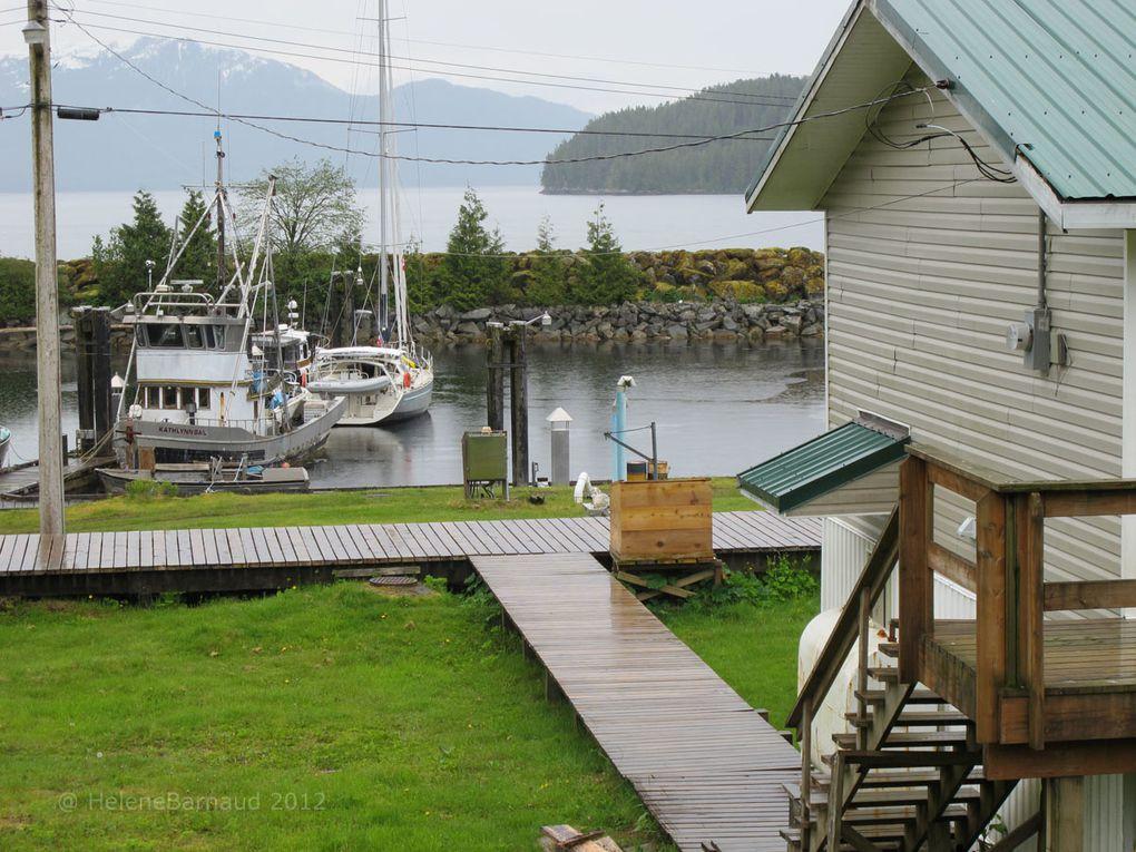 Entre les fjords et la côte de la Rain Forest