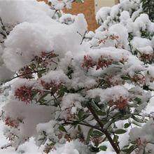 CAP : Solaize en neige
