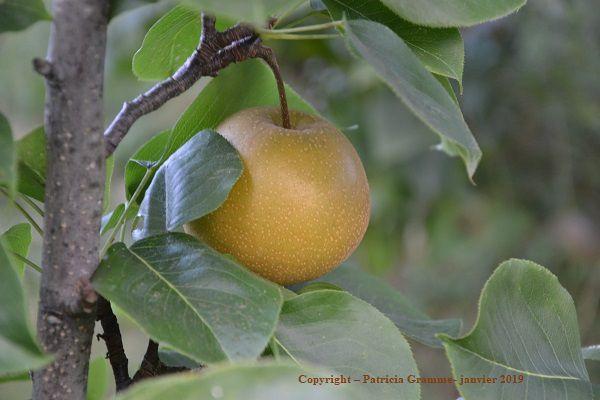 Quels arbres fruitiers planter dans son jardin potager (achats groupés) ?
