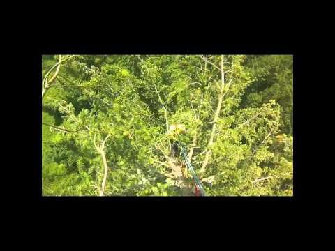 Grimpe et mesure de l'arbre le plus haut de France