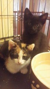 Mosaique et Manuska, chatons femelles, à l'adoption -> adoptées