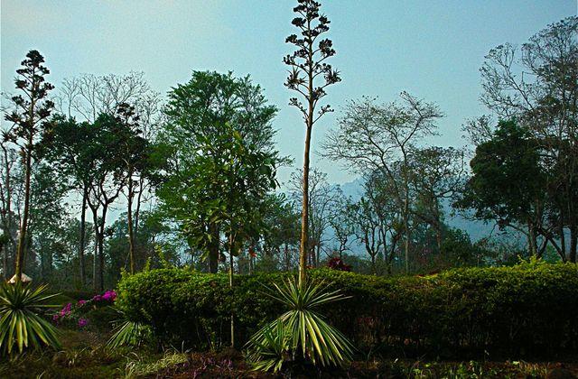 Thailande et Laos: feuilles, feuillages et écorces (2)