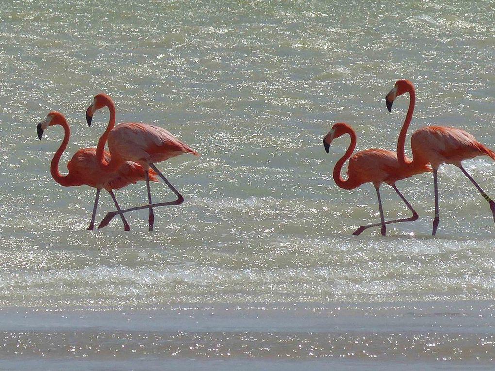 Kankirixche - Mayapán - Rio Lagartos -Cancun - Retour en France