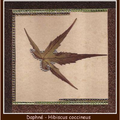 """La page de Daphné pour """" l'herbier des amis d'agathe """""""