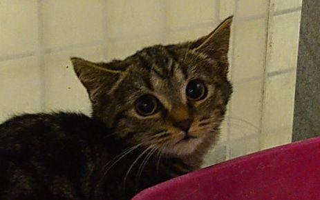 chatons ADOPTES : Lilo, Sansa et Crispie