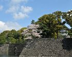Spring of the Imperial Palace2