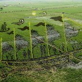 Des dessins de riz dans des champs chinois - La boite verte