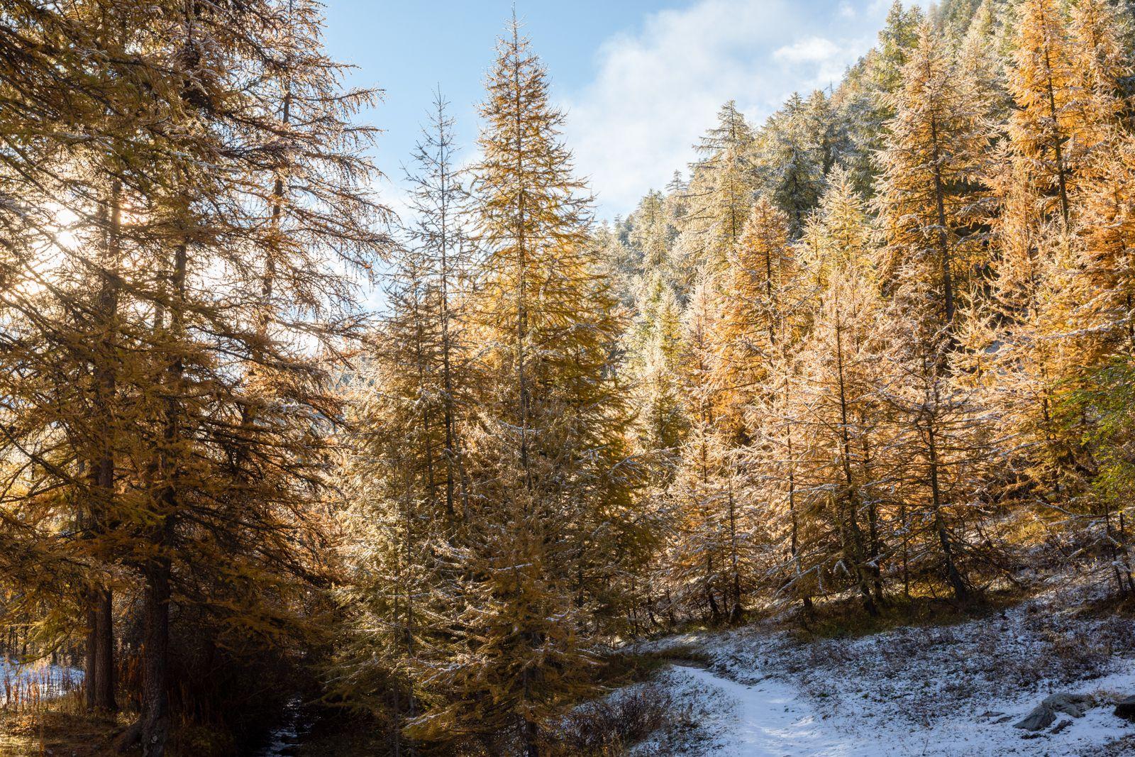 Queyras - vallée de Ceillac et lac miroir