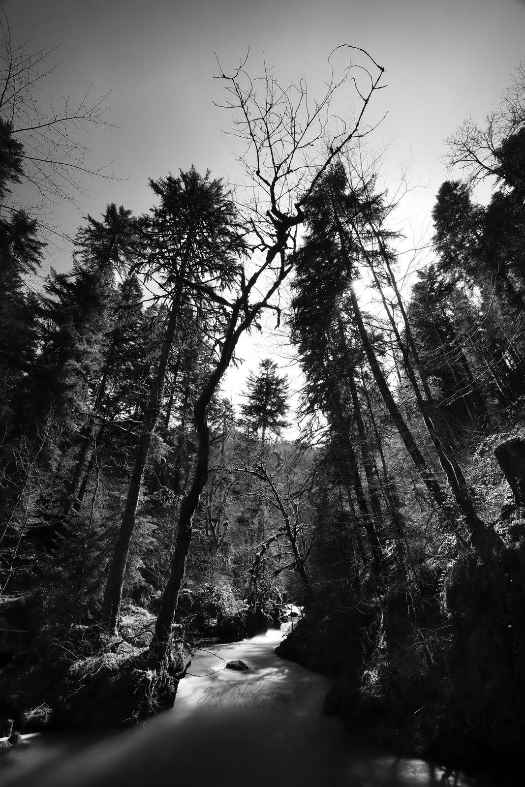 Doubs - Lumière de printemps - 3 - Val de Consolation - ©2021 Jean-Robert Longhi Photographie non libre de droits.