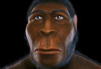 Da prateria a foresta, come cambiò in fretta l'ambiente di Homo erectus