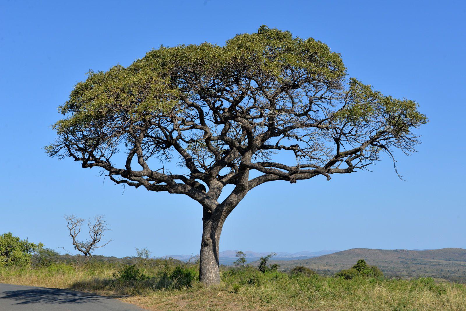 Afrique du Sud / 4 / Il est 08h32, nous sommes le 13 Novembre 2020