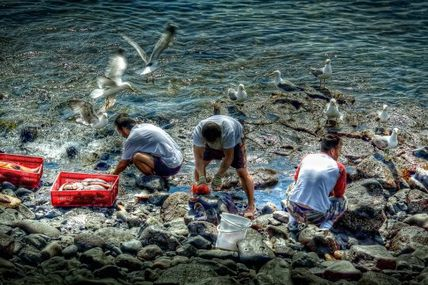 Après l'accaparement des terres, c'est la mer qu'on s'approprie, par privatisation de ses ressources halieutiques, et au nom de la conservation.