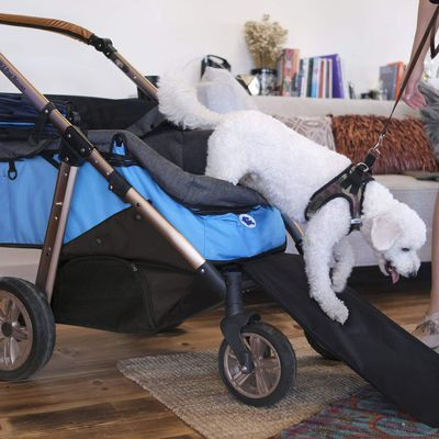 Make Your Old Dog Comfortable with These Tips!