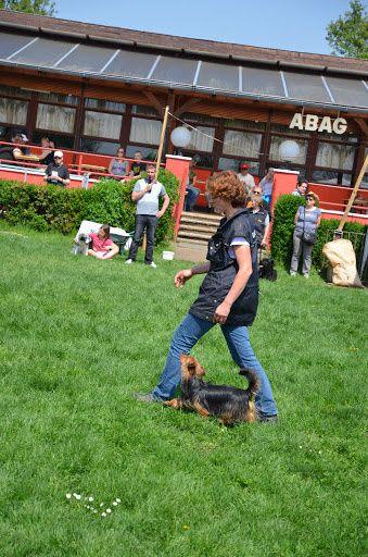 """Quelques photos de la journée. Si vous voulez en découvrir un peu plus vous pouvez aller sur le lien qui se trouve dans l'intitulé """"Journée du chien (album photo)."""