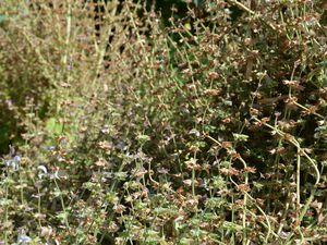Dordogne - Jardins panoramiques de Limeuil - Photos: Lankaart (c)