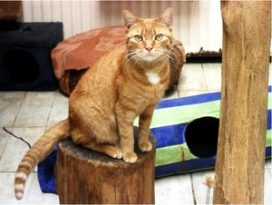 Chatte ADOPTEE : Caramelle
