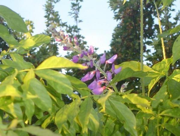 Album - Nature et jardin 2
