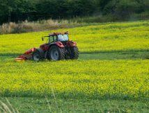 Tracteur dans champ jaune ....