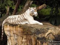 Le Zoo de Singapour-The Singapore Zoo