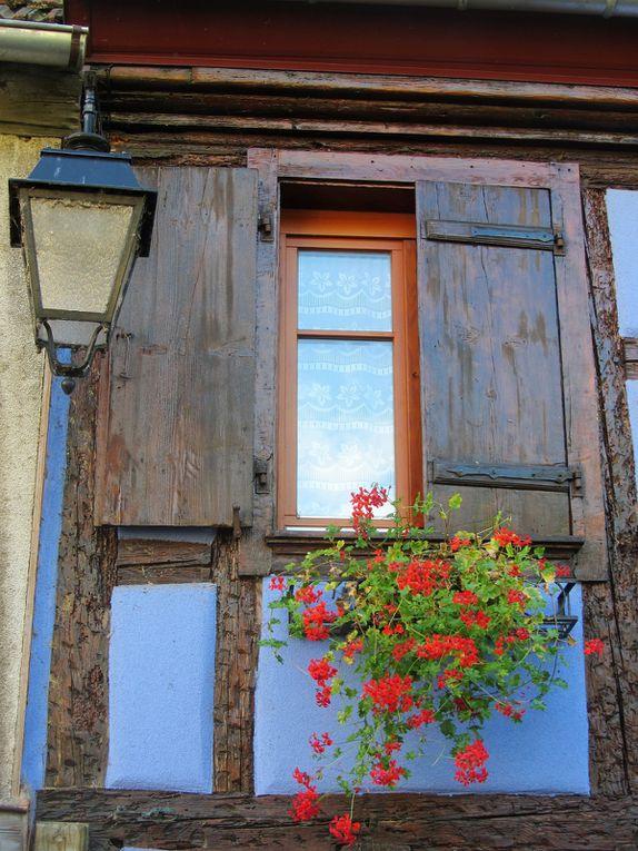 en Alsace Partager 913           Tout comme le vin, la cigogne ou la choucroute, les géraniums font partie du patrimoine alsacien