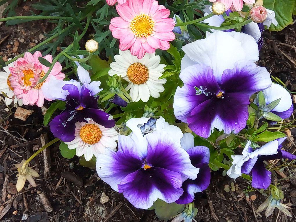 Fleurs de mon jardin... Suite...