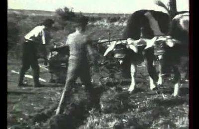 Vidéo de l'Auvergne des années 50